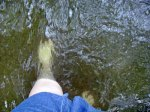Wading in Plum Creek