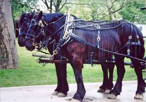 Flynet on Horses