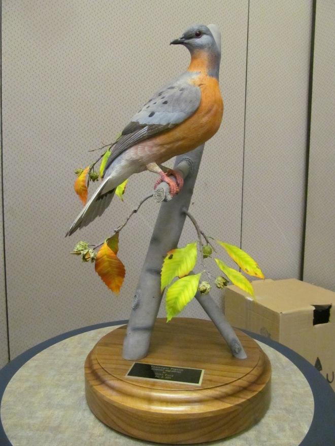Passenger Pigeon Replica