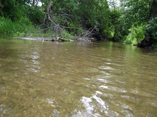 Plum Creek at Eye Level