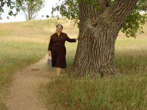 Old Laura Cottonwood Tree