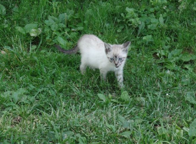 White and Gray Kitten in grass