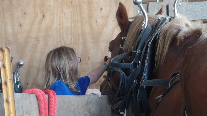 Little Girl Petting Horses Head